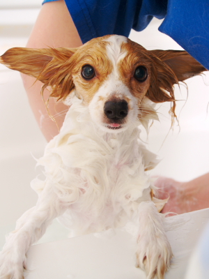 TIP39doggettingbath.ashx